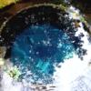 コバルトブルーの柿田川湧水を見に行った