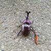 【旅行】カブトムシを見つけた